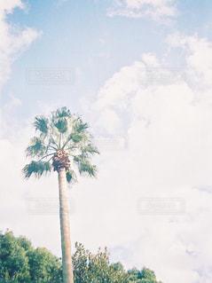 ヤシの木のある公園 - No.827080