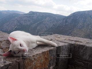 山の横に座っている猫の写真・画像素材[734098]