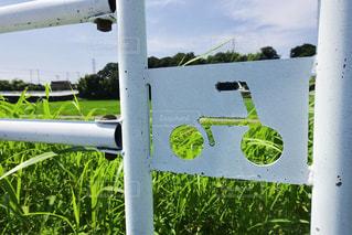 緑の中でサイクリングの写真・画像素材[733433]