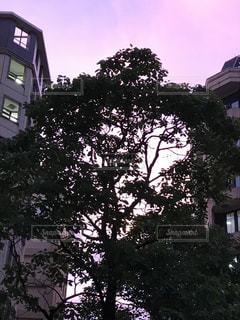 木の陰影の写真・画像素材[735583]
