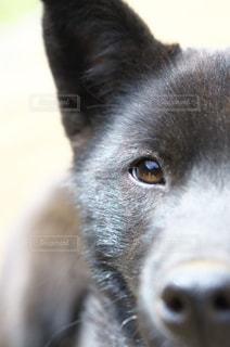 綺麗な瞳の写真・画像素材[866722]