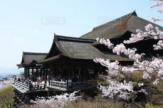 清水寺と桜の写真・画像素材[1030560]