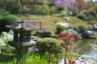 お寺の庭の写真・画像素材[1050588]