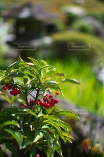 お寺の庭 - No.1050589