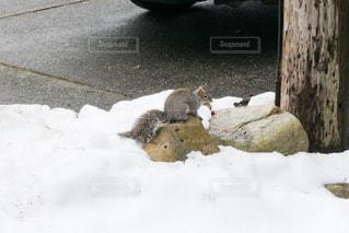 リスと雪 - No.1050746