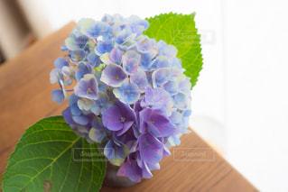 花のある生活  紫陽花の写真・画像素材[2283402]