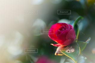 近くの花のアップの写真・画像素材[1151410]