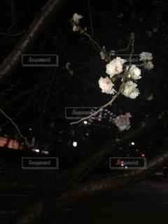 テーブルの上の花の花瓶の写真・画像素材[974749]