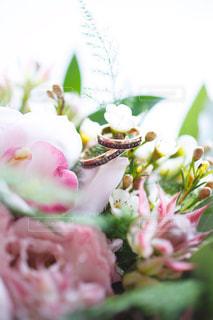 近くの花のアップの写真・画像素材[735673]