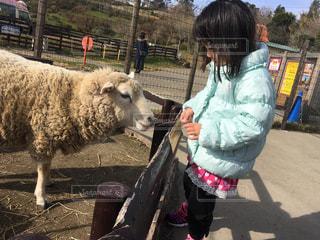 羊とのふれあい - No.737509