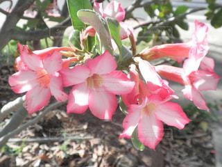 ピンクの花のアップ - No.740463