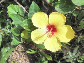 近くの花のアップ - No.740466