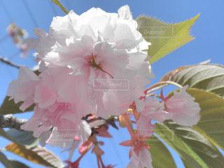 近くの花のアップ - No.740478