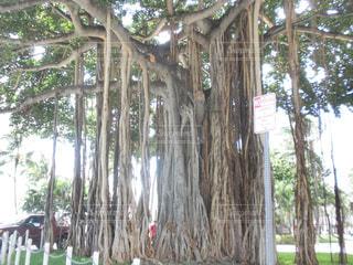 ツリーの横にあるヤシの木のグループ - No.740481