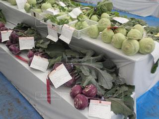 葉物野菜 - No.740501