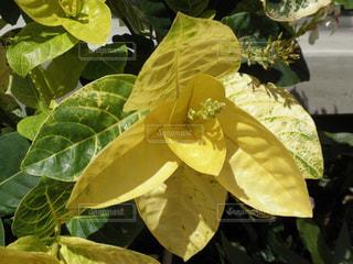 ハワイの植物のアップ - No.740518