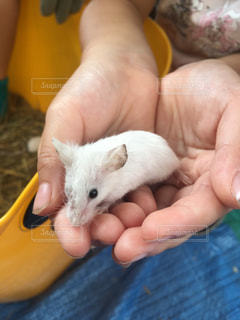 小さなネズミです - No.771218