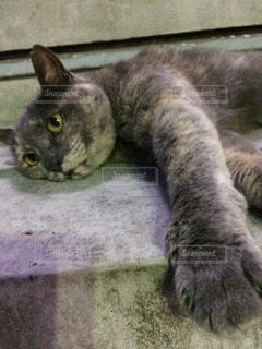 猫の写真・画像素材[33062]