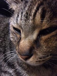 猫の写真・画像素材[21184]
