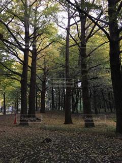 森の大きな木の写真・画像素材[894177]
