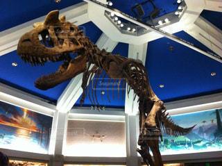 The dinosaurの写真・画像素材[737140]
