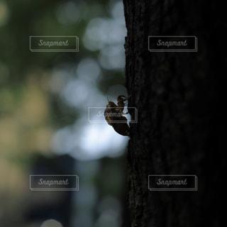 木の上に座っている鳥の写真・画像素材[737306]
