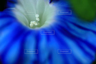 近くの花のアップの写真・画像素材[737308]