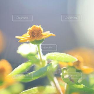 近くの花のアップの写真・画像素材[737314]