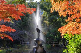 木々 に囲まれた鶴の噴水(日比谷公園)の写真・画像素材[925979]