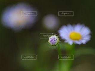 近くの花のアップの写真・画像素材[925980]