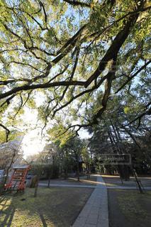 川口神社の境内の写真・画像素材[932152]
