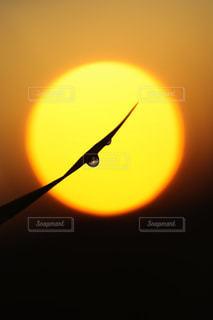 朝陽を迎える朝つゆの写真・画像素材[937828]