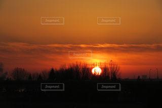 木々からの日の出の写真・画像素材[938390]