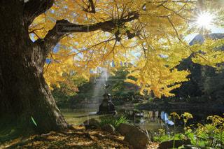 銀杏と鶴の噴水の写真・画像素材[941920]