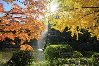 紅葉の樹木と鶴の噴水の写真・画像素材[941977]