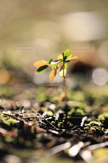 冬に育つ小さな芽の写真・画像素材[954143]