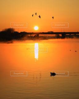 朝陽に目覚める鳥たちの写真・画像素材[972663]