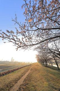 土手沿いの桜並木の写真・画像素材[980297]