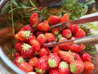 フルーツ ボウルに盛られたイチゴの写真・画像素材[1136449]