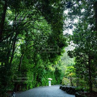 境内を歩く宮司の写真・画像素材[1187810]