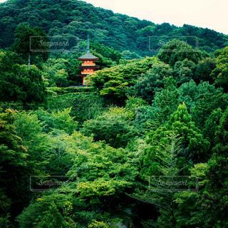 緑に囲まれた清水寺の写真・画像素材[1378839]