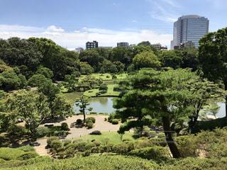 都会の極上庭園 六義園の写真・画像素材[1395464]