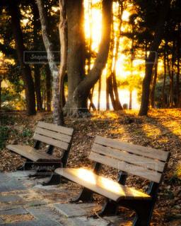 夕陽を浴びた公園のベンチの写真・画像素材[1751944]