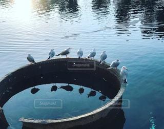 水面で休む鳥たちの写真・画像素材[1759295]
