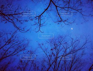 枯れ木の隙間から見える三日月の写真・画像素材[1764181]