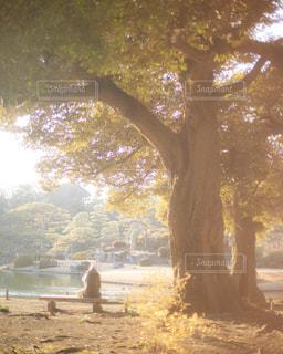 大きな木の下で休む人の写真・画像素材[1764182]