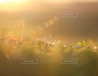 朝日を浴びての写真・画像素材[1764322]