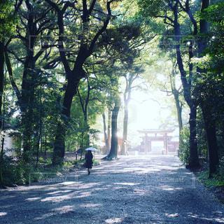 参拝へ向かう参道の写真・画像素材[1764472]