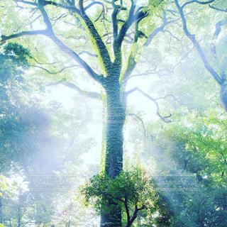 光が差す樹木の写真・画像素材[1765083]