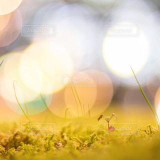 ネオンに浮かぶ小さな芽の写真・画像素材[1765500]